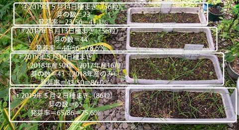 20190903yusuge_planter_1y_2018seed_20190502-14start.jpg