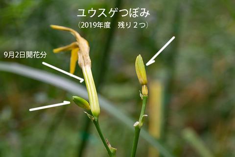 20190905yusuge-jiue_tsubomi01-1320.jpg