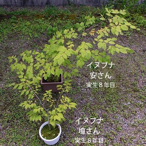 20190907inubuna8y_an_dan_01.jpg