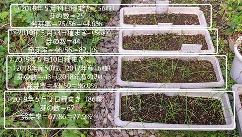 20190920yusuge_planter_1y_2018seed_20190502-14start.jpg