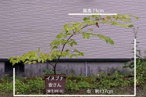 20190921inubuna8y_an_01.jpg