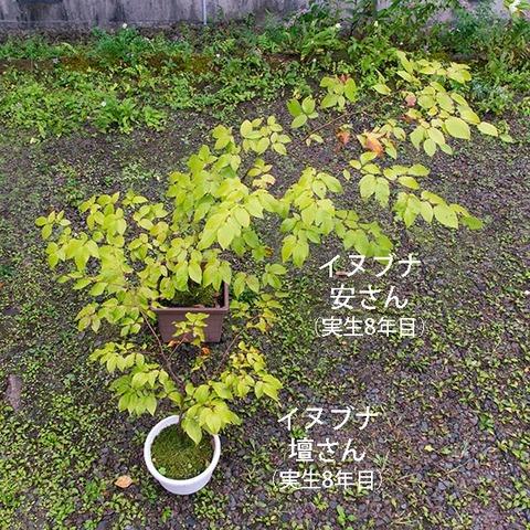20190921inubuna8y_an_dan_01.jpg