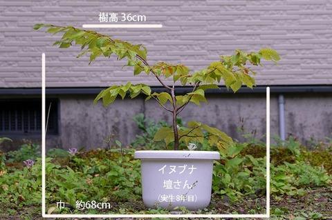 20190921inubuna8y_dan_01.jpg