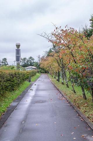 20190921yagasaki-sakura03.jpg