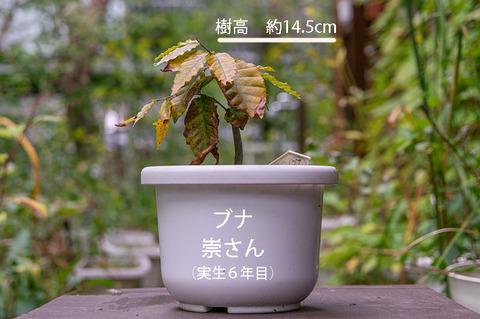 20190922buna_su_6y_01.jpg