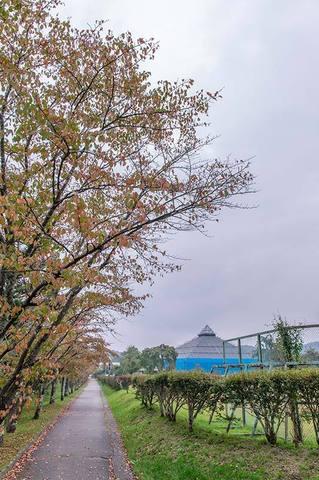 20190928yagasaki-sakura01.jpg