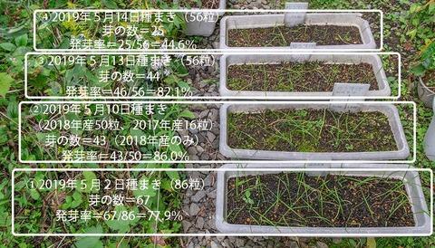 20190930yusuge_planter_1y_2018seed_20190502-14start.jpg