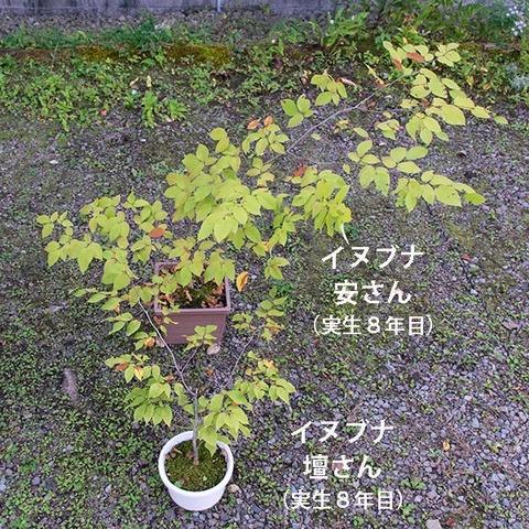 20191005inubuna8y_an_dan_01.jpg