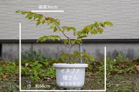 20191005inubuna8y_dan_01.jpg