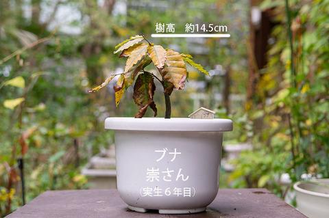 20191006buna_su_6y_01.jpg