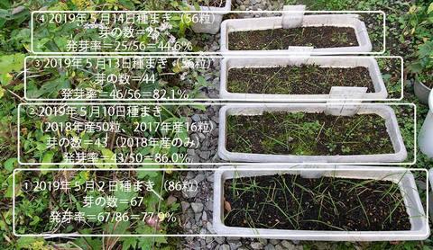 20191010yusuge_planter_1y_2018seed_20190502-14start.jpg