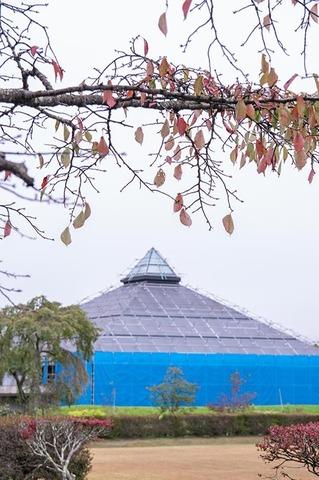 20191011yagasaki-sakura02.jpg