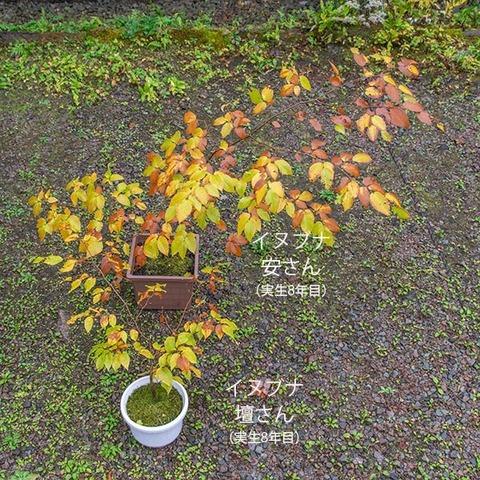 20191019inubuna8y_an_dan_01.jpg