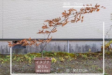 20191102inubuna8y_an_01.jpg
