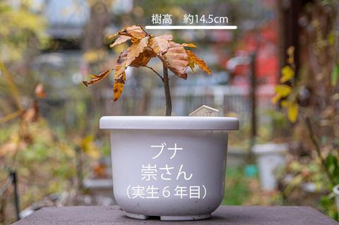 20191111buna_su_6y_01.jpg
