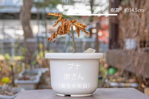 20191120buna_su_6y_01.jpg