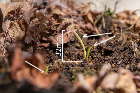 20200325yusuge_planter_5y-20160518-02.jpg