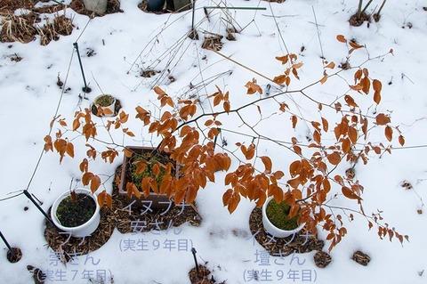 20200401inubuna9y_an_dan_buna_7y_su_01.jpg