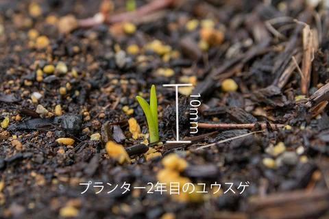 20200402yusuge_planter_2y_20190502_02.jpg