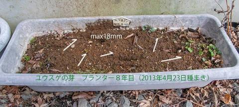 20200402yusuge_planter_8y_01.jpg