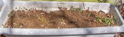 20200414yusuge_planter_8y_20130423.jpg