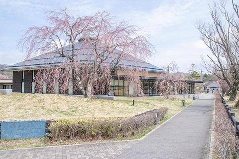 20200421yagasaki-shidare-sakuraB01.jpg