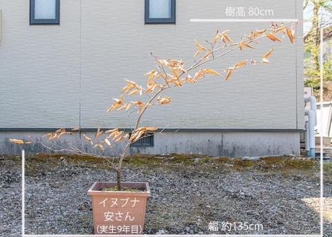 20200424inubuna9y_an_01.jpg