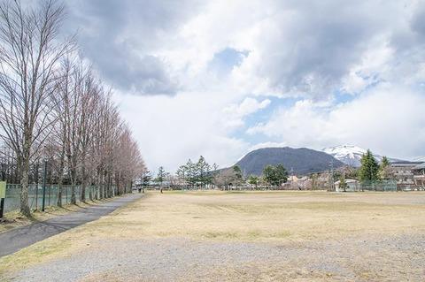 20200424yagasaki-katsura02.jpg