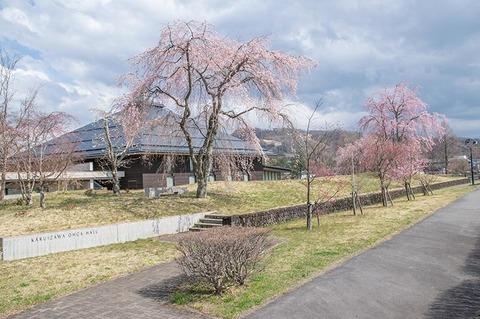 20200427yagasaki-shidare-sakuraA01.jpg