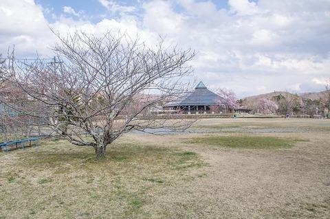 20200427yagasaki-shidare-yaezakura01.jpg