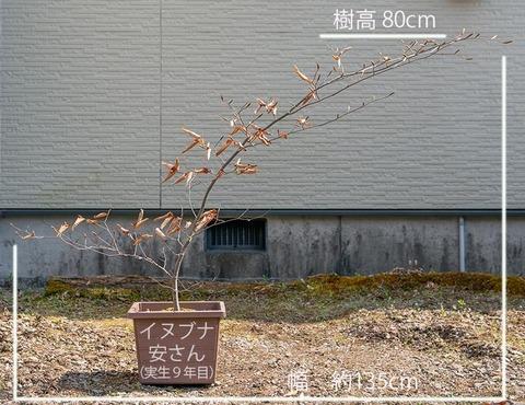 20200430inubuna9y_an_01.jpg