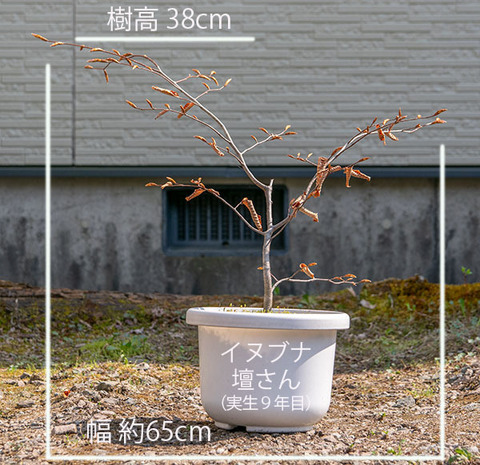 20200430inubuna9y_dan_01.jpg