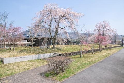 20200430yagasaki-shidare-sakuraA01.jpg