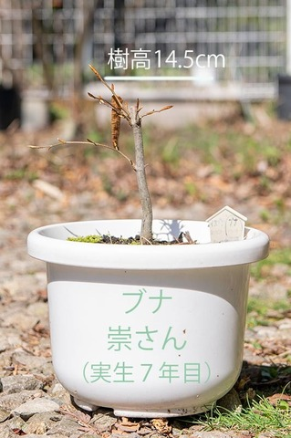20200501buna_su_7y_01.jpg