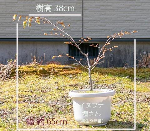 20200502inubuna9y_dan_01.jpg