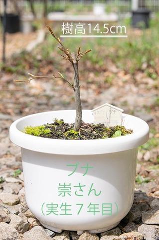 20200503buna_su_7y_01.jpg