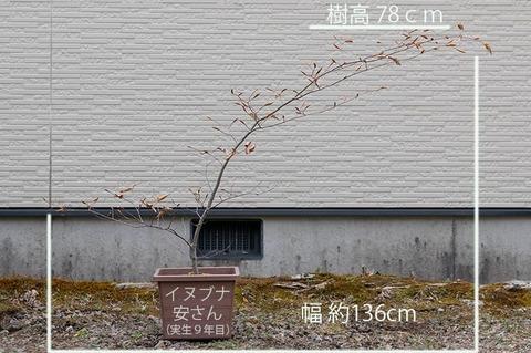 20200503inubuna9y_an_01.jpg
