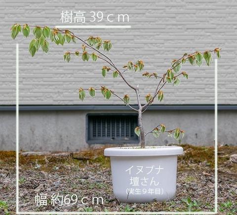 20200503inubuna9y_dan_01.jpg