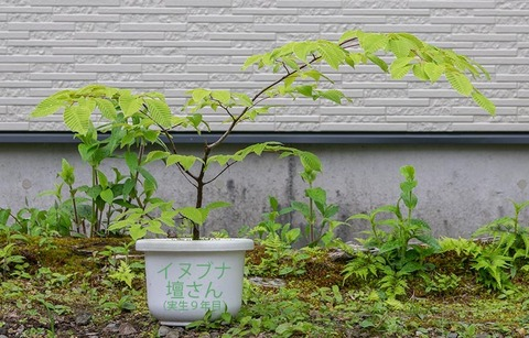 20200601inubuna9y_dan_00.jpg