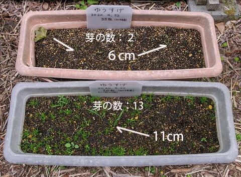 20200611yusuge_planter_1y_20200422_A&B01.jpg