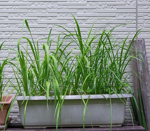 20200611yusuge_planter_4y_20170504_01.jpg