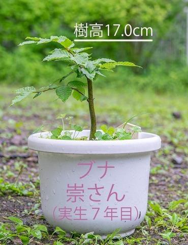 20200614buna_su_7y_01.jpg