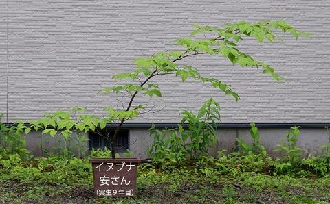 20200614inubuna9y_an_00.jpg