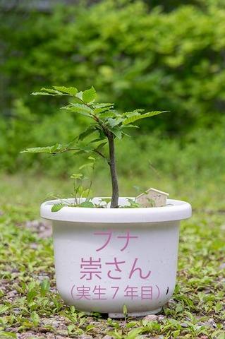 20200623buna_su_7y_00b.jpg