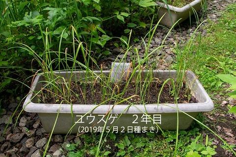 20200709yusuge_planter_2y_20190502_01.jpg