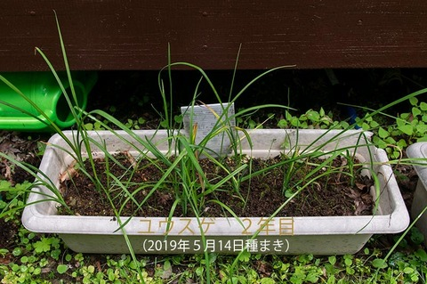 20200709yusuge_planter_2y_20190514_01.jpg