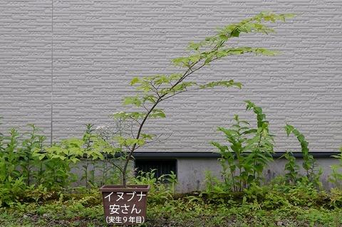 20200724inubuna9y_an_00.jpg