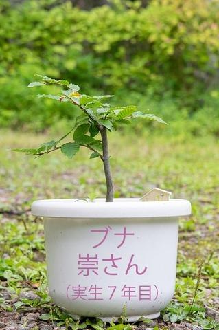 20200802buna_su_7y_00.jpg