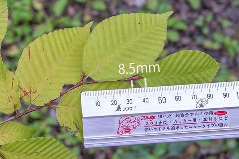 20200823inubuna9y_dan_02.jpg