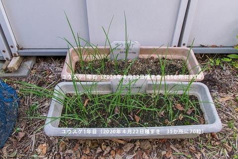 20200830yusuge_planter_1y_20200422_A&B01.jpg
